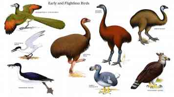 early and flightless birds