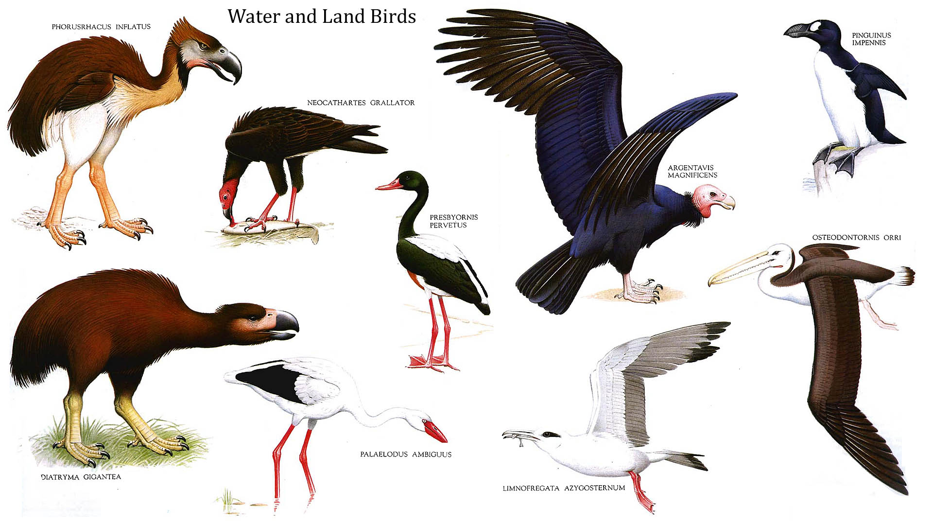 Water And Land Birds