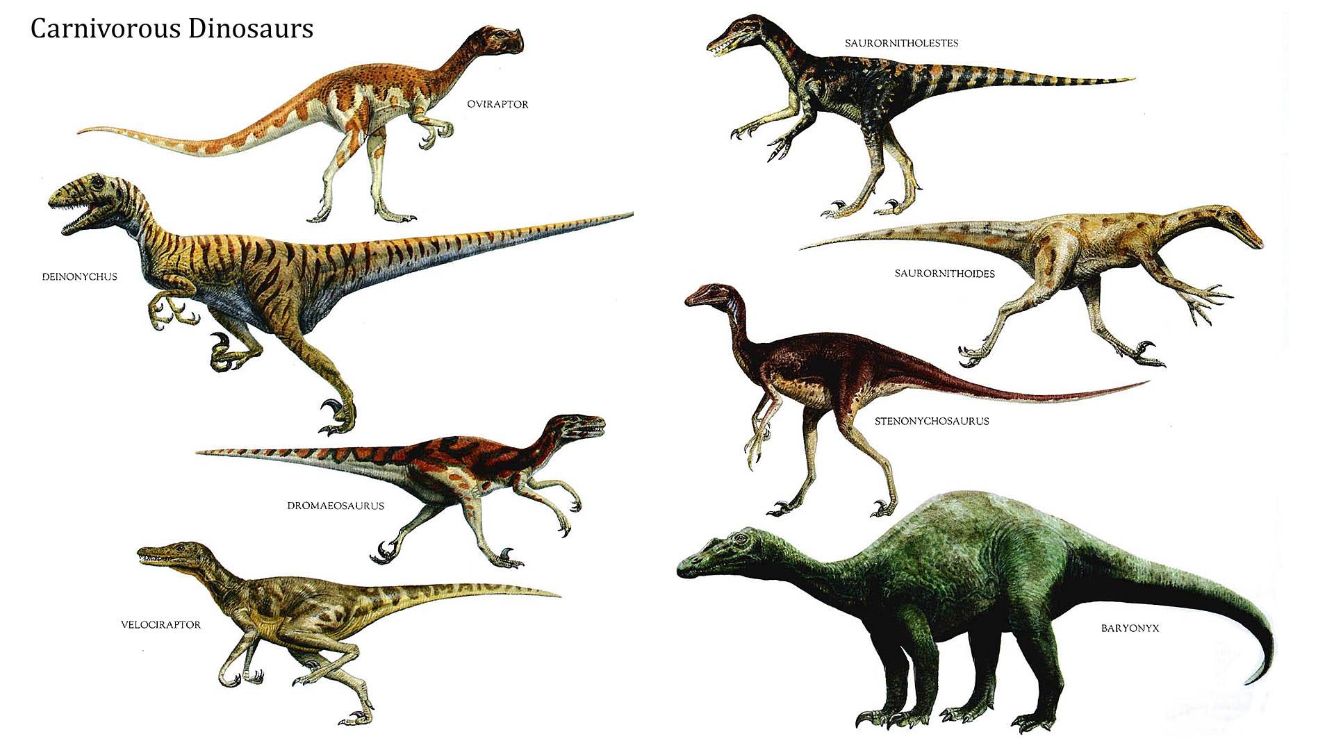 Carnivorous Dinosaurs  Dinosaurs