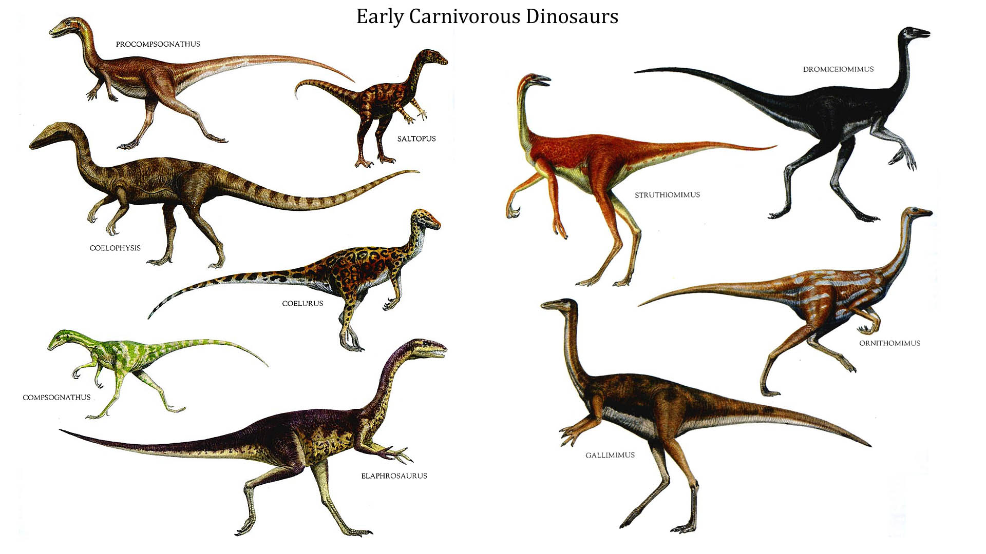 Early Carnivorous Dinosaurs