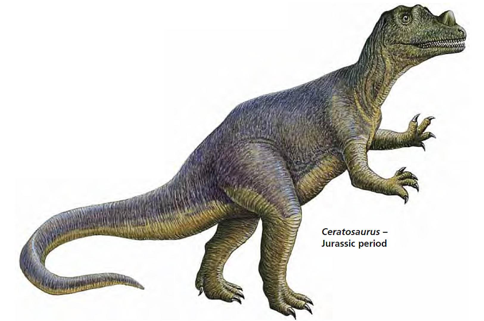 Jurassic Period Ceratosaurus