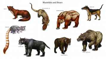 mustelids and bears