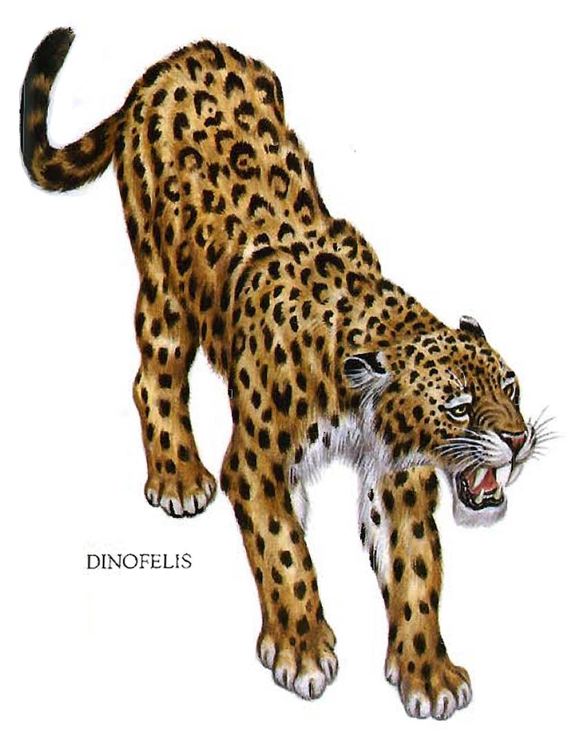 Dinofelis Spotted Leopard