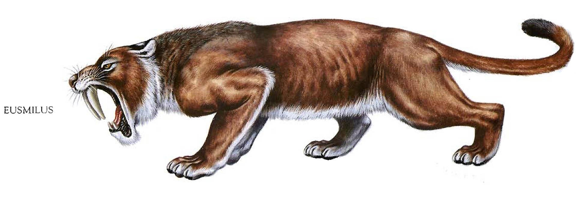 Eusmilus Sabre Toothed Tiger
