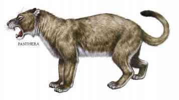 panthera panther