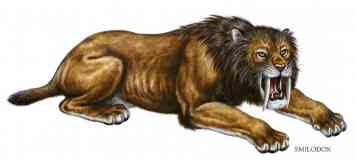 smilodon sabre toothed lion