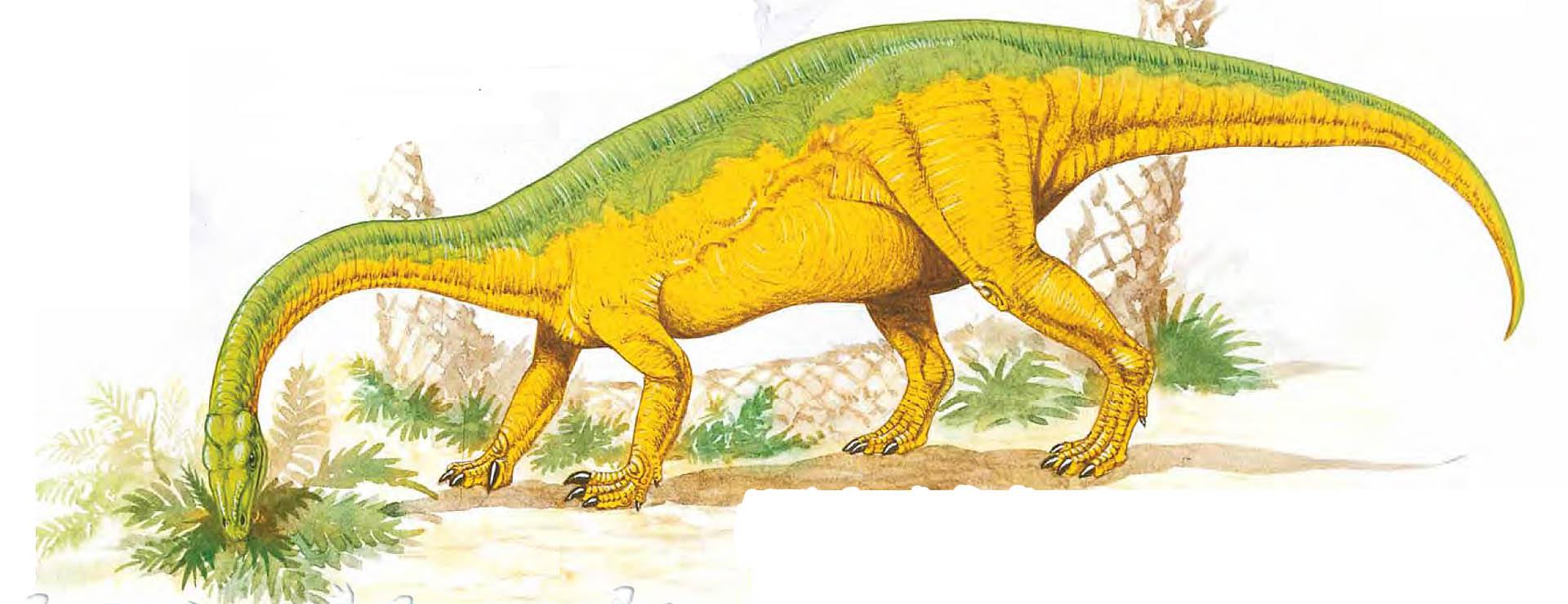 Anchisaurus Eating Vegetation