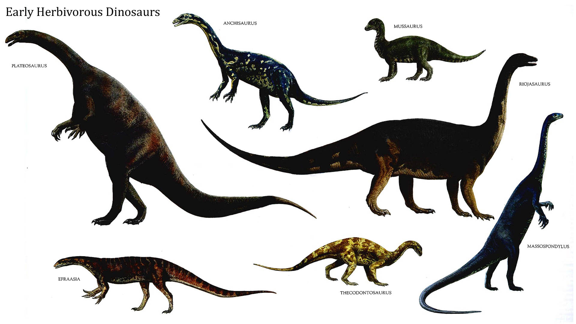 Early Herbivorous Dinosaurs