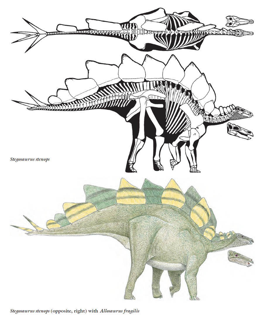 Flat Plated Stegosaurus