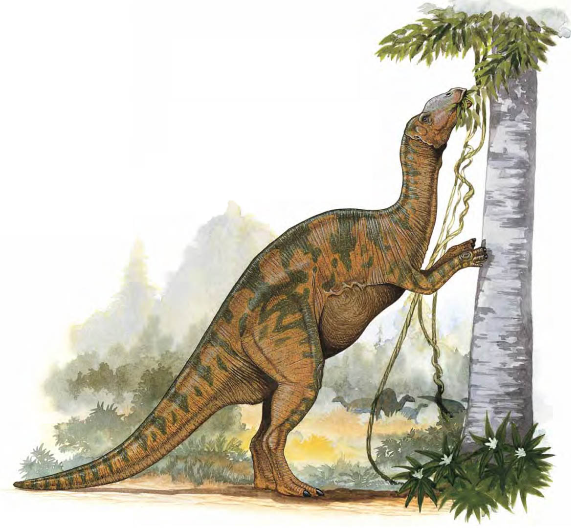 Hadrosaurus Eating Leaves From A High Tree