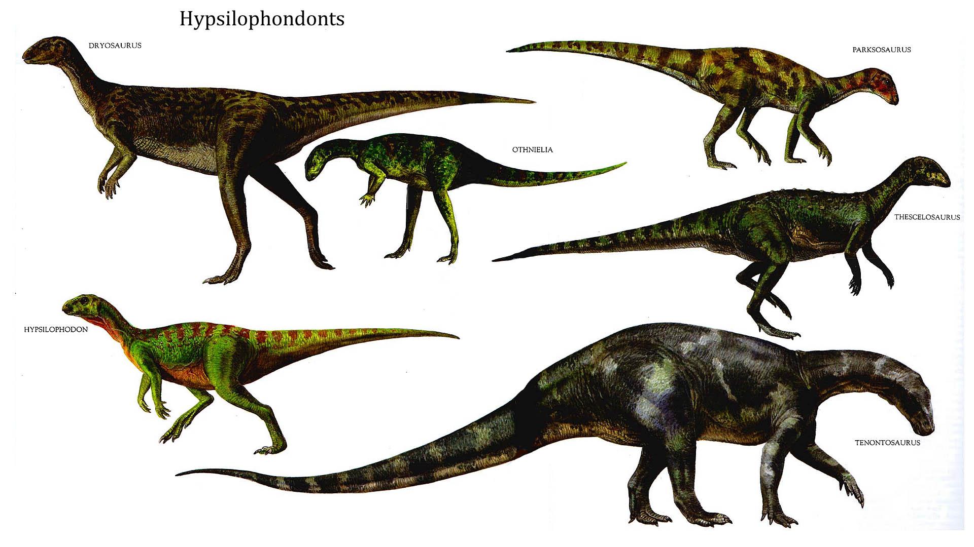 Hypsilophondonts