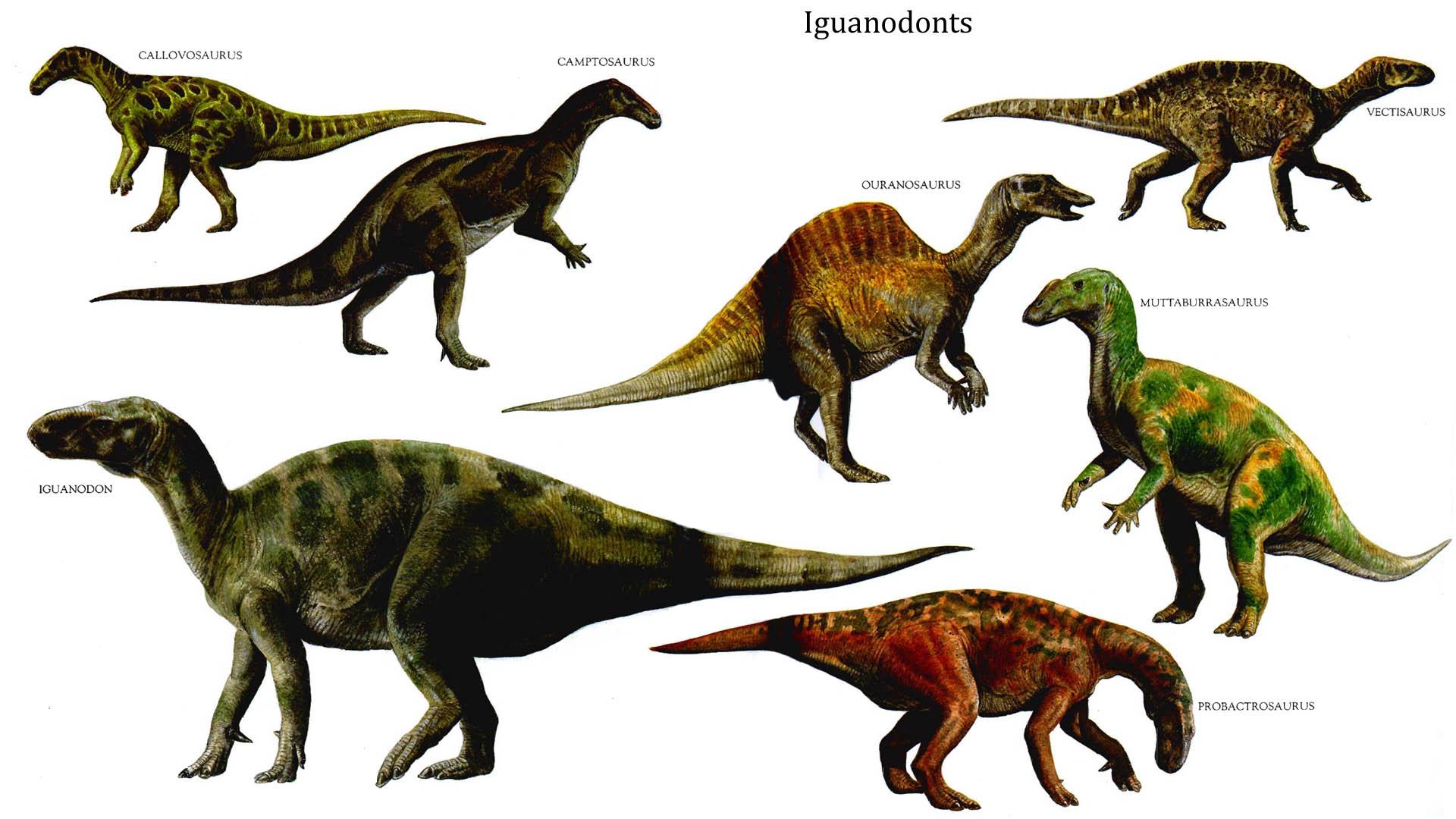 Search herbivore dinosaurs information myideasbedroom com