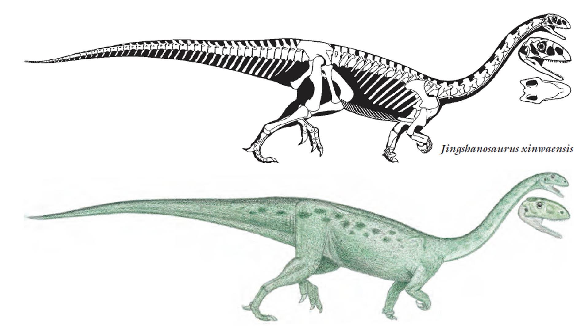 Jingshanosaurus herbivore dinosaurs wallpaper image