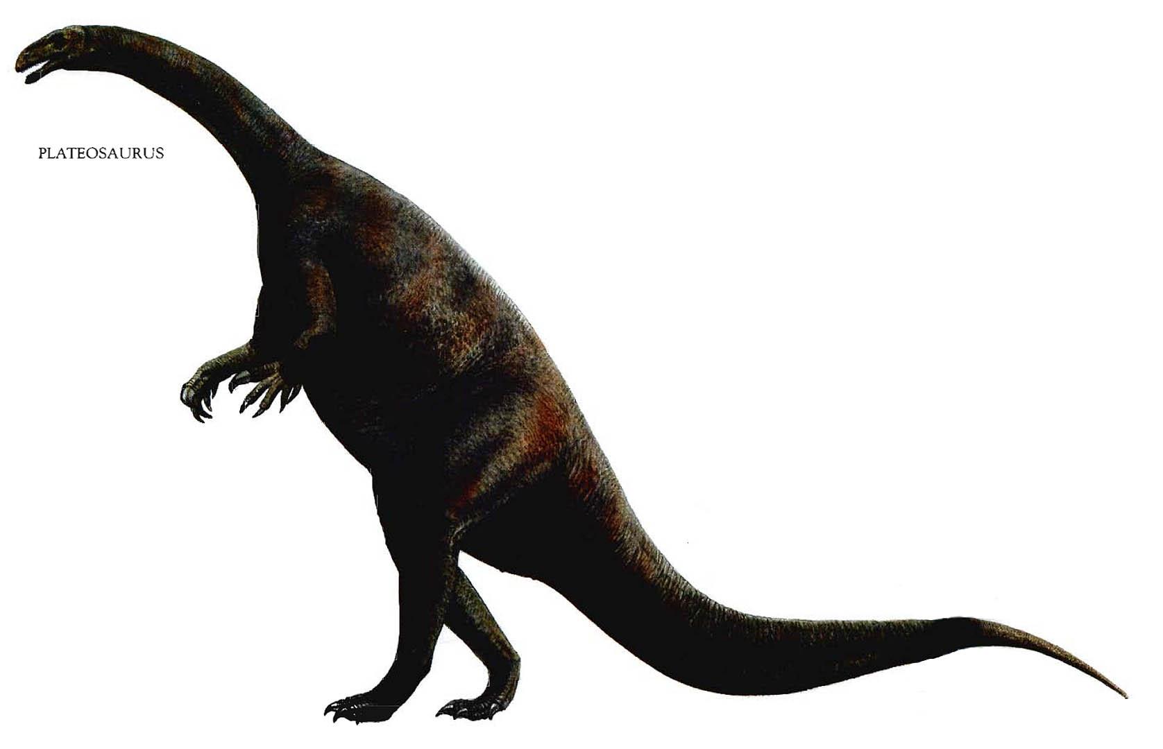 Large plateosaurus herbivore dinosaurs wallpaper image
