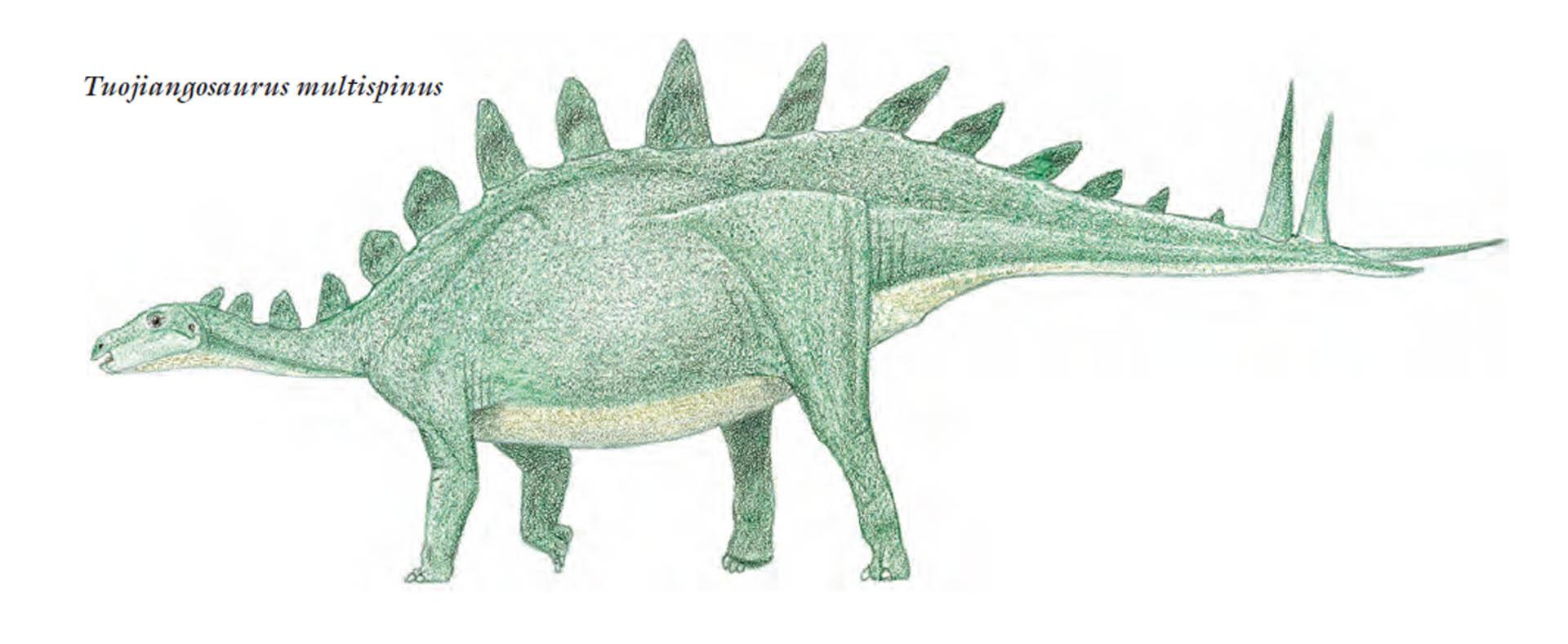 Multi Spined Stegosaurus 2