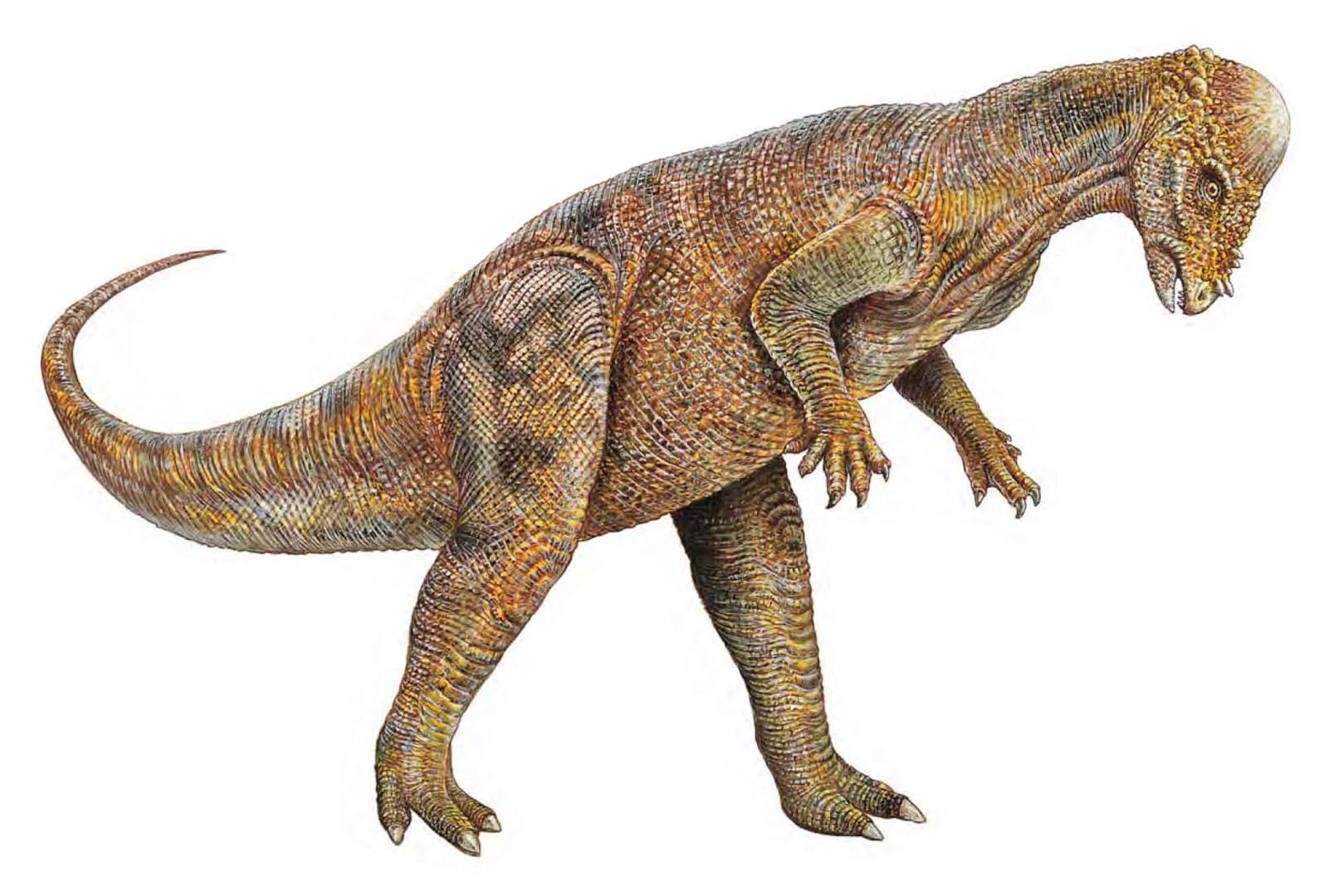 Pachycephalosaurus Head Swiper