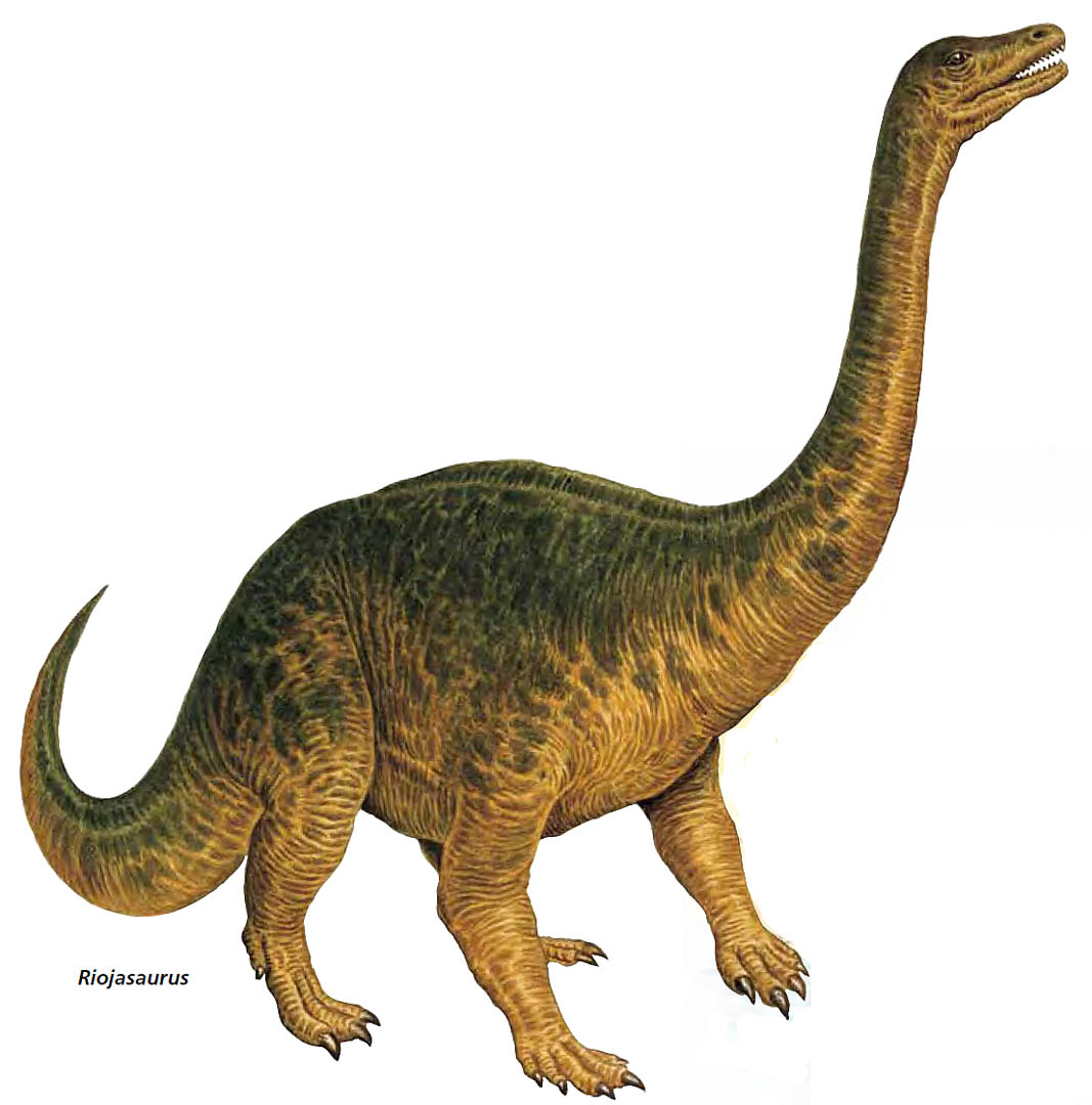 Herbivore Dinosaurs Information