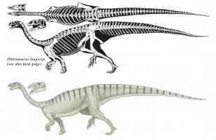 plateosaurus longiceps