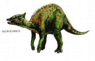 saurolophus