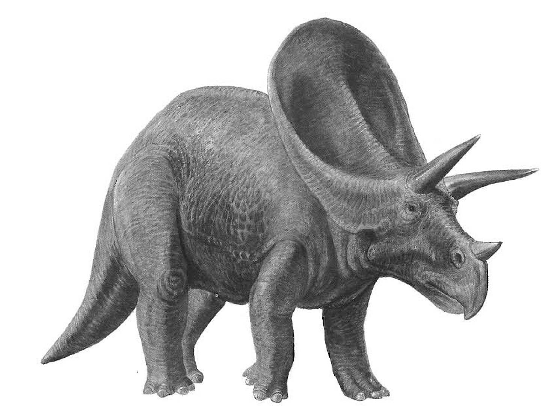 Triceretops herbivore dinosaurs wallpaper image