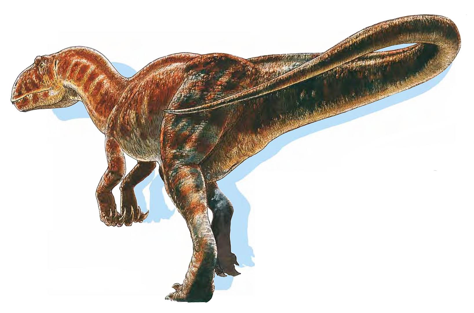 Carnivorous Carcharodontosaurus