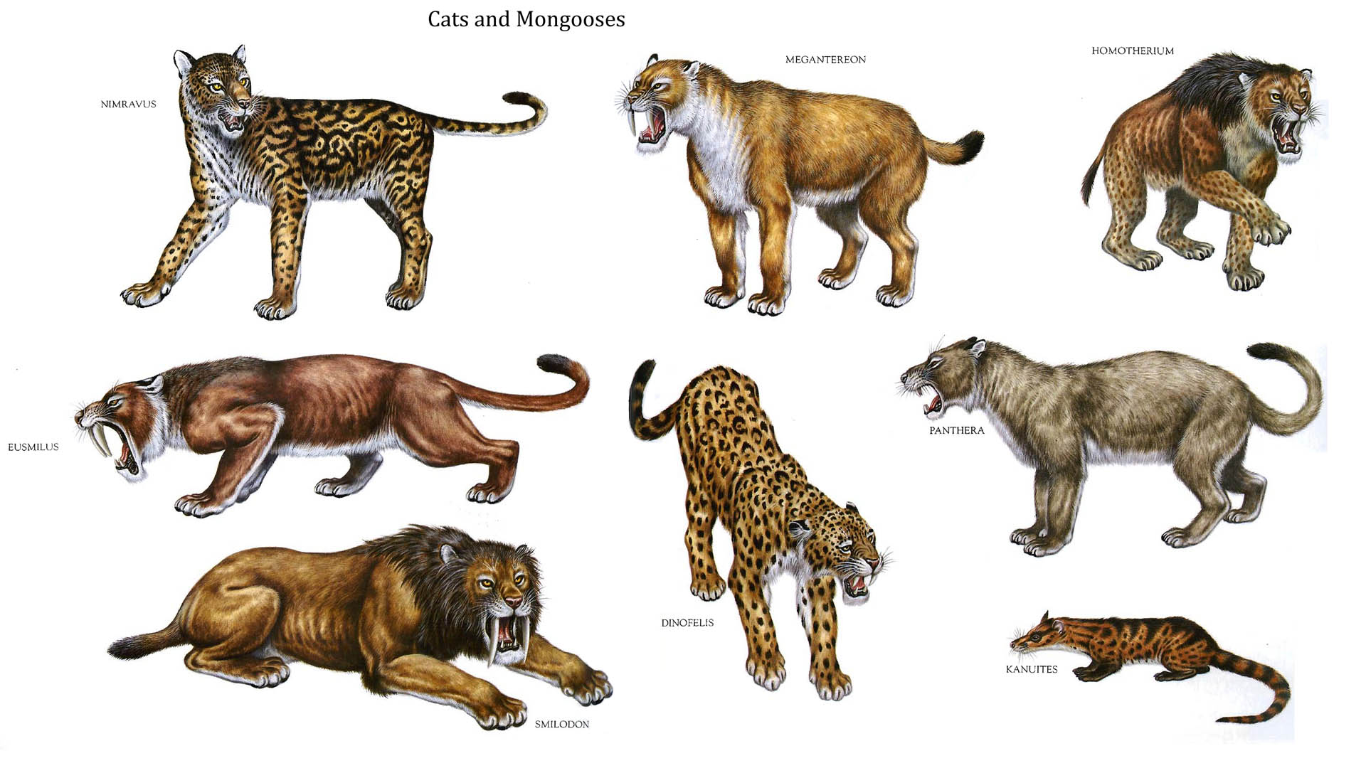 Cats And Mongooses