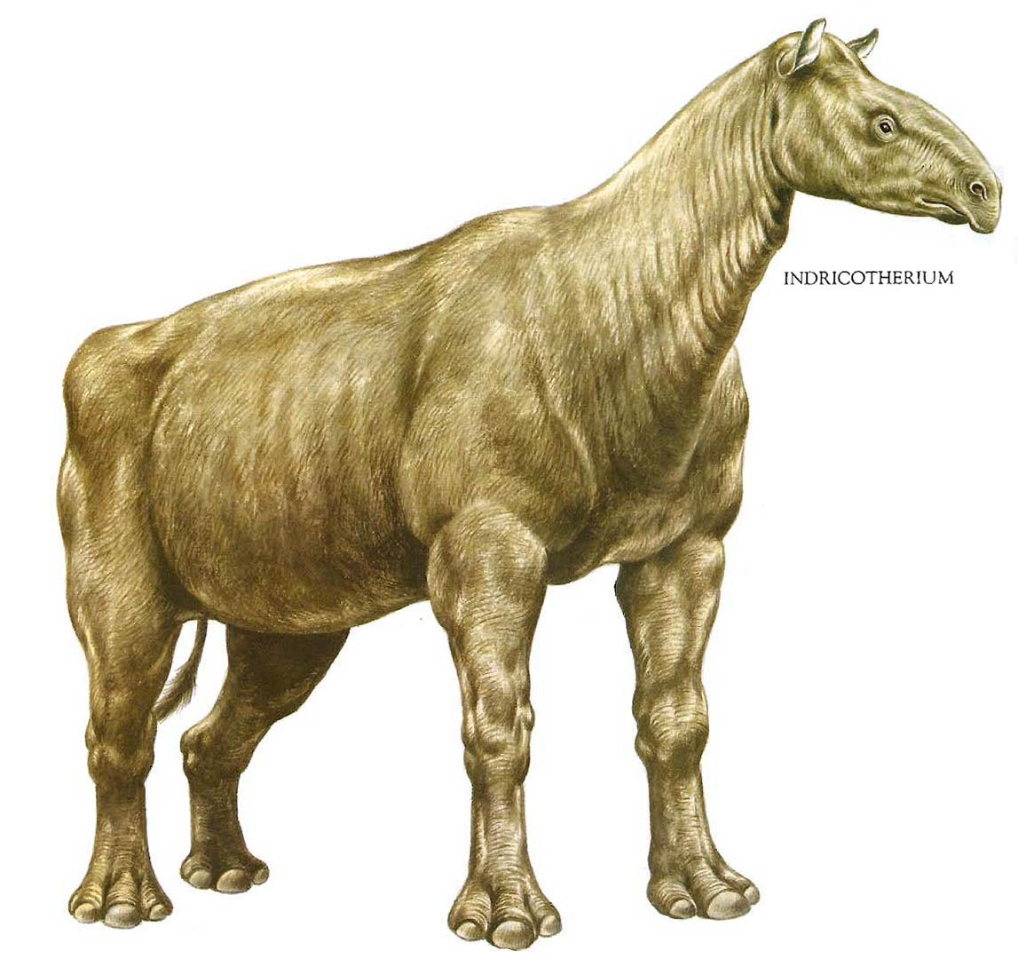 Giant Rhinoceros Indricotherium