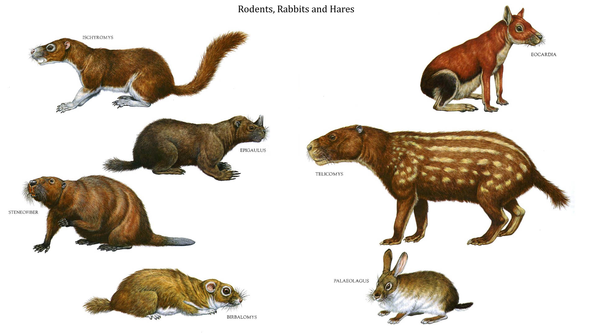 Rodents Rabbits And Hares