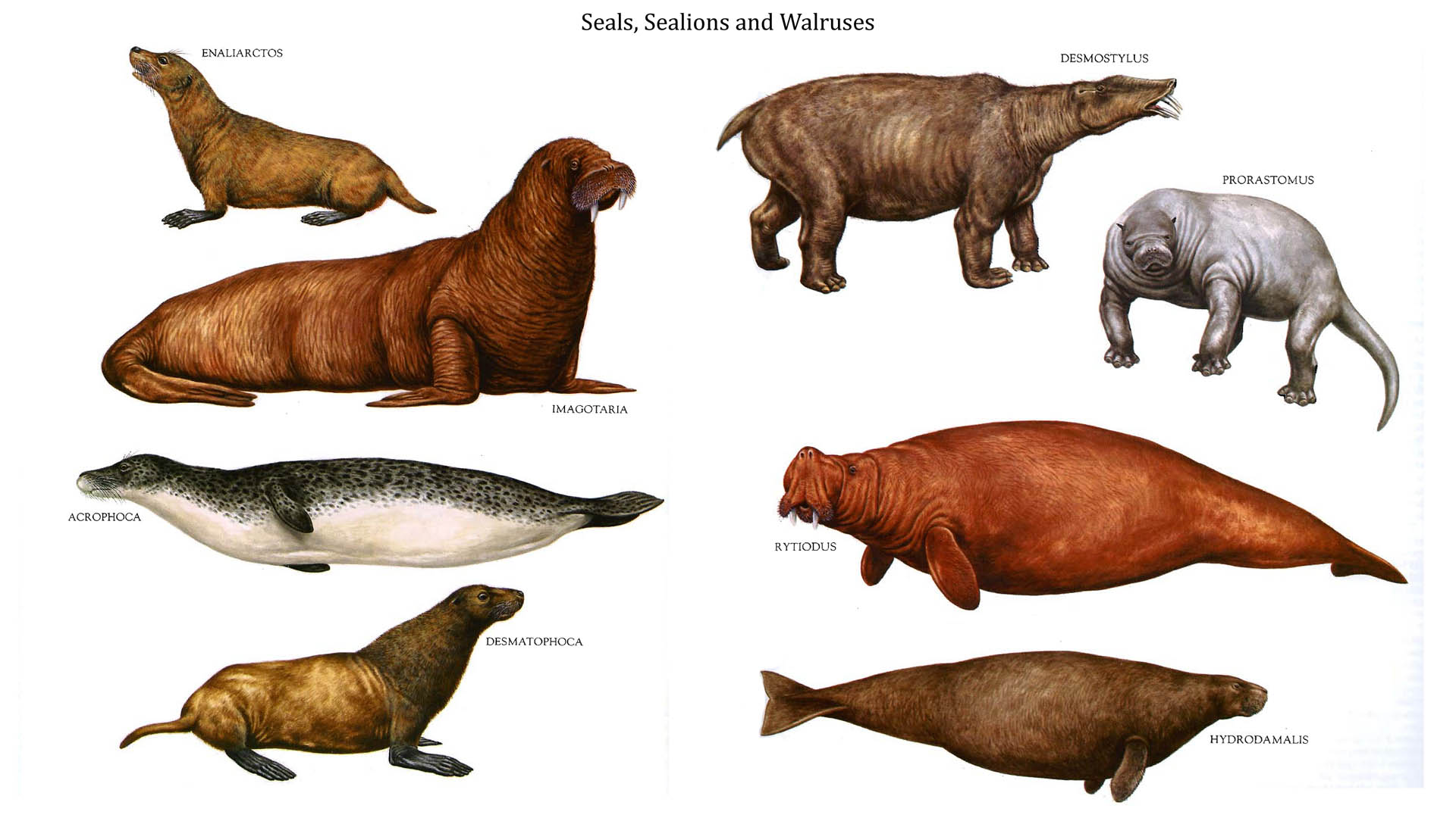 Seals Sealions And Walruses