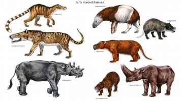 early hooved animals