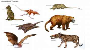 insectivores and creodonts