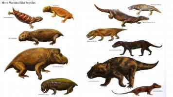 mammal like reptiles 2
