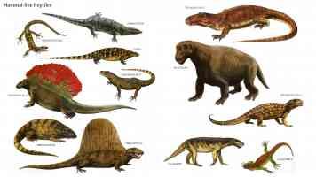 mammal like reptiles