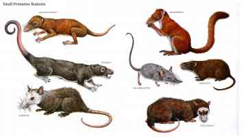 small primative rodents
