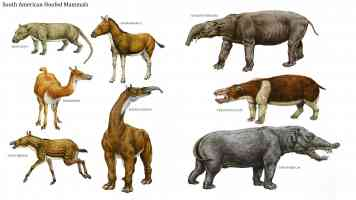 south american hoofed mammals
