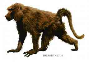 theropithecus gibbon