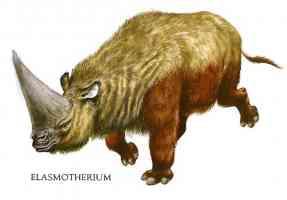 woolly rhinoceros elasmotherium