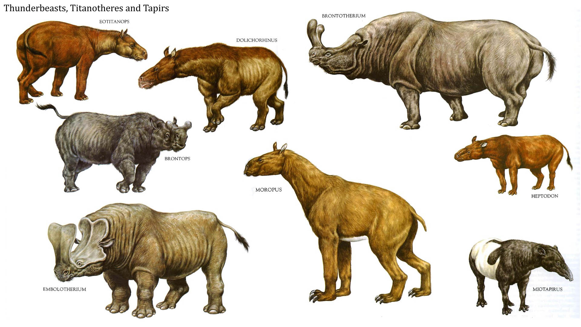 Thunder Beasts Titanotheres And Tapirs