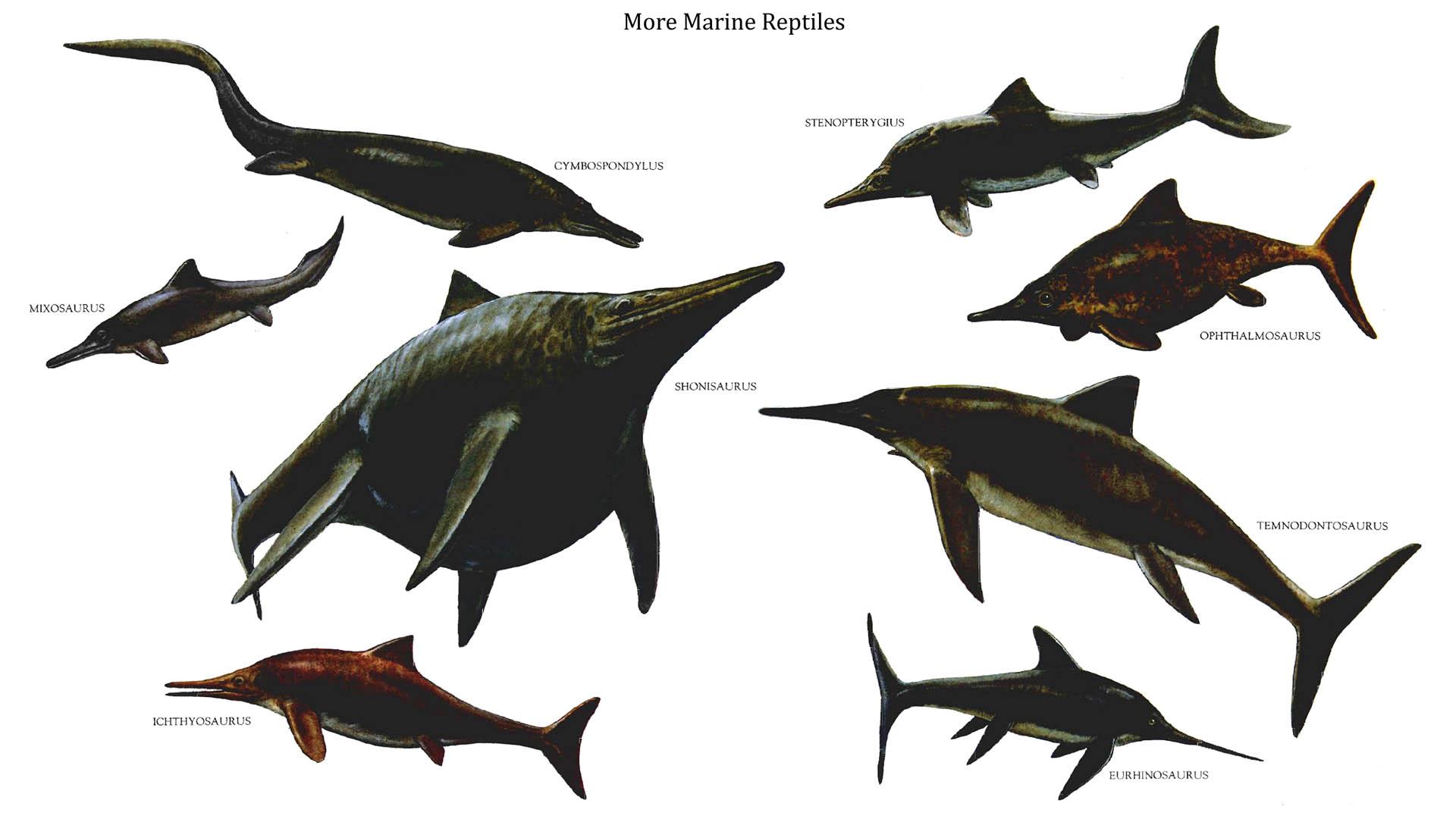 Marine Reptiles 2