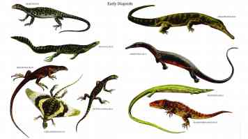 early diapsids