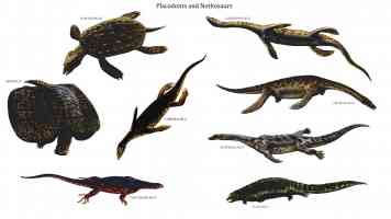 placodonts and nothosaurs