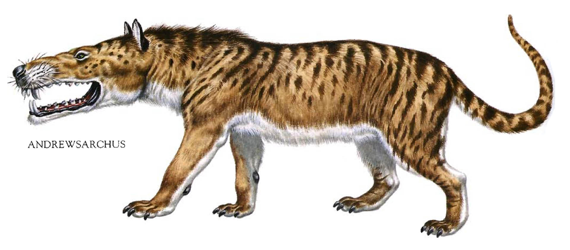 Andrewsarchus Huge Mouthed Hyena