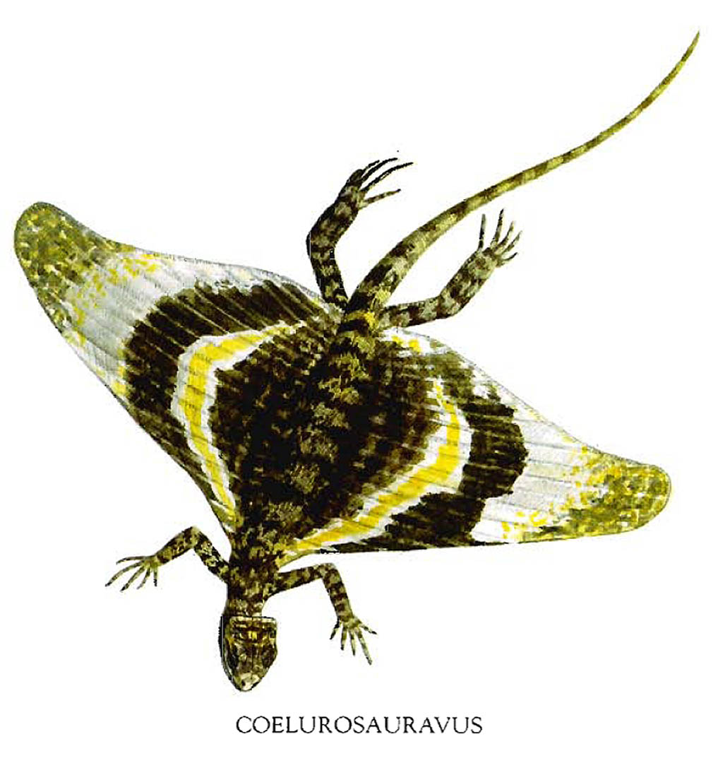 coelurosauravus-flying-butterfly-lizard.jpg