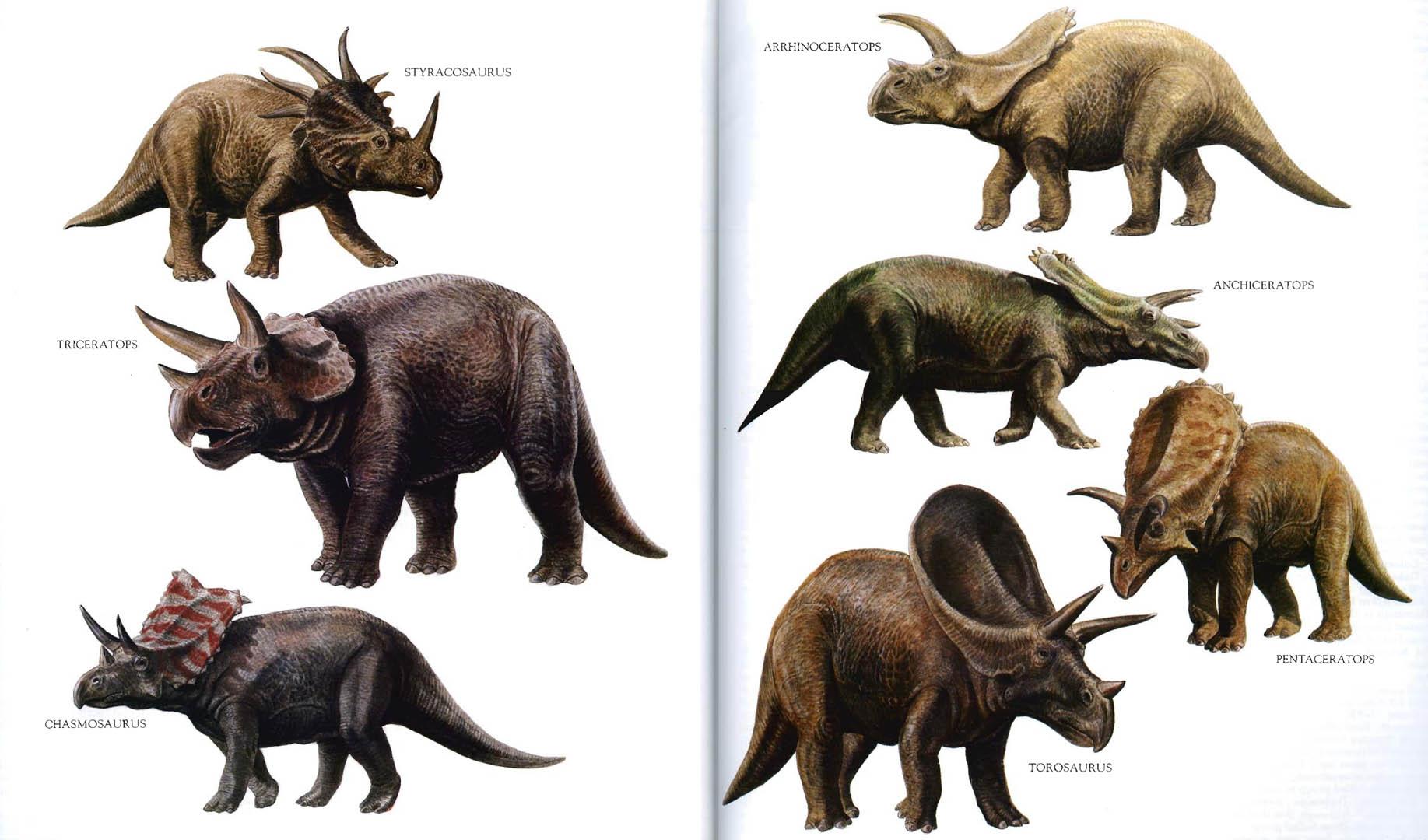 Horned Dinosaurs 2 - strange  Dinosaurs