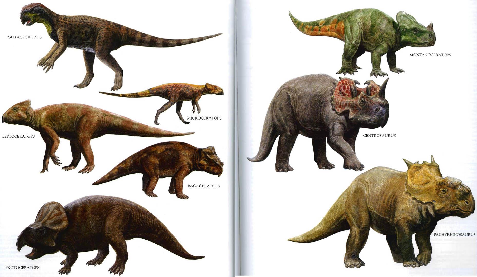 4  Dinosaurs