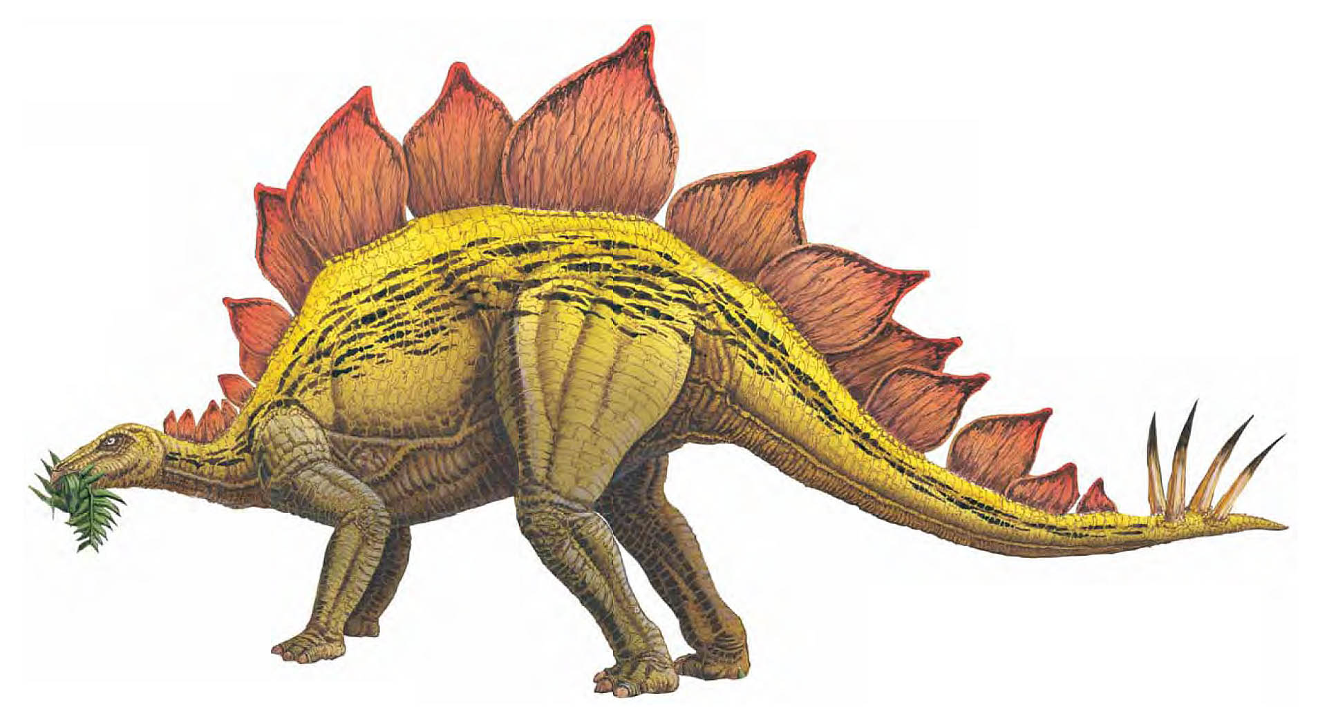 Stegosaurus With Spine Fins