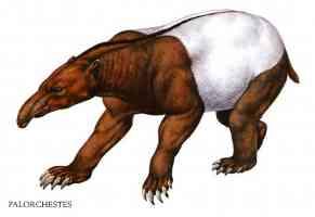 palorchestes anteater bear