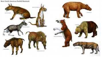 south american hoofed mammals 2