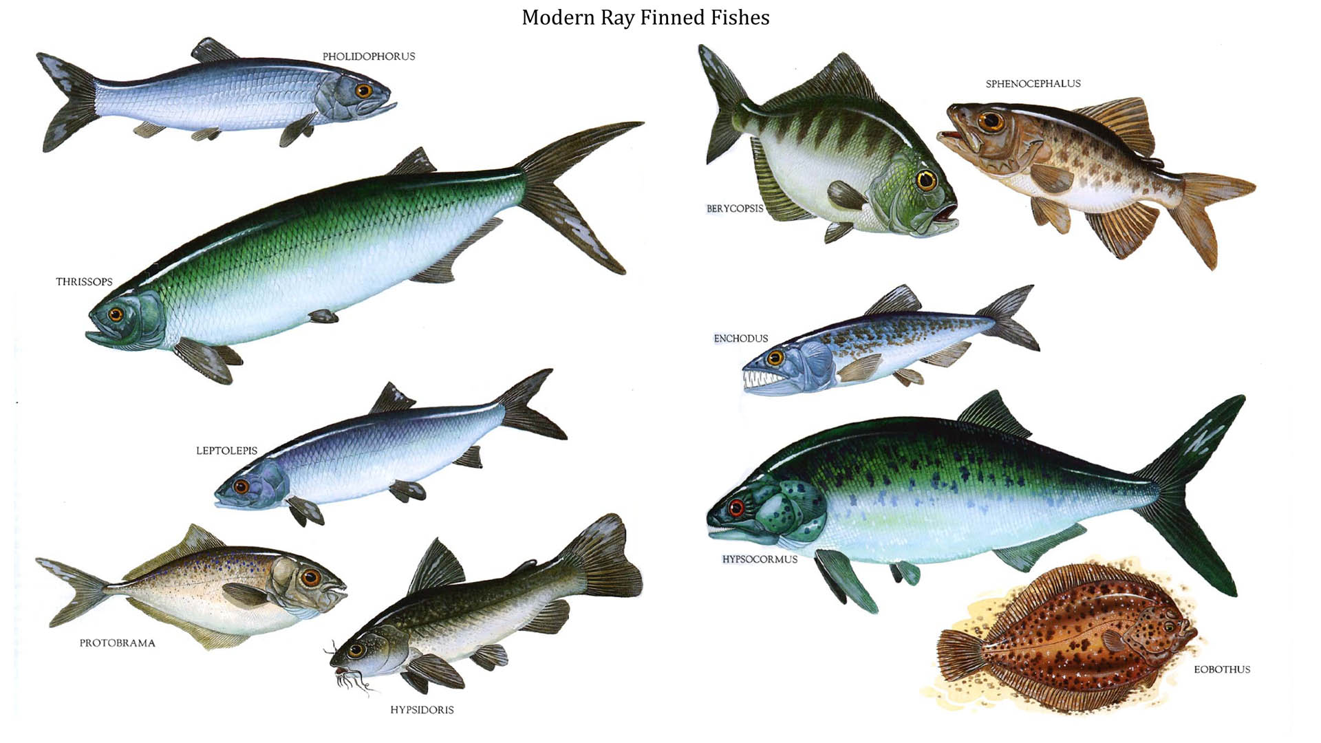 Water dinosaurs names cake ideas and designs for Examples of fish