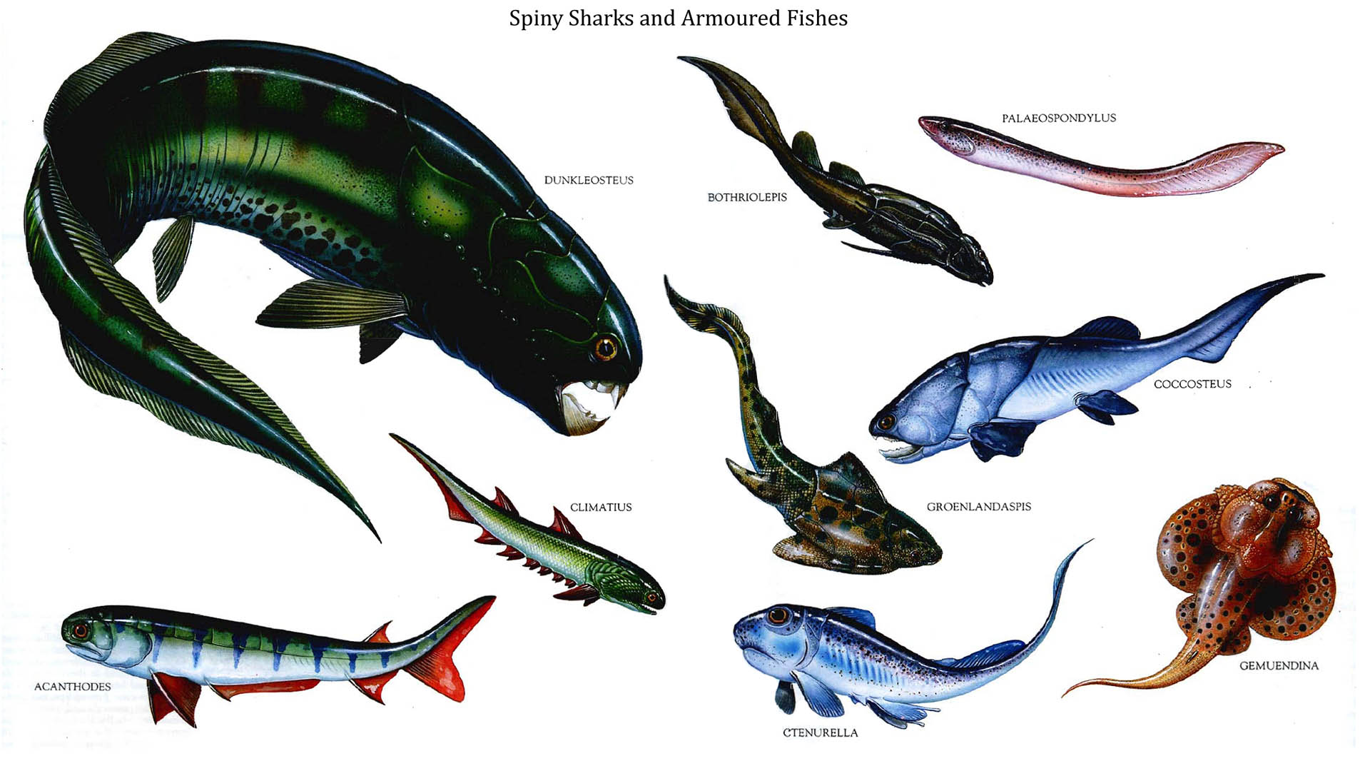 Water Based Spiny Sharks And Armoured Fishes